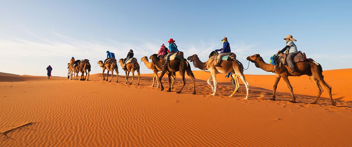 Camellos_desierto